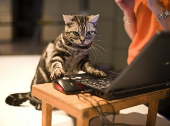 funny-image-of-a-kitten-using-the-computer-570x422